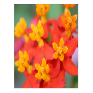 Succulent Red and Yellow Flower III Postcard