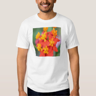 Succulent Red and Yellow Flower III Shirt