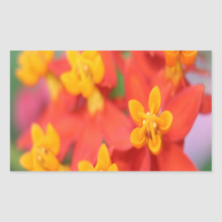 Succulent Red and Yellow Flower III Rectangle Sticker