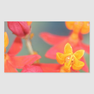 Succulent Red and Yellow Flower Sticker