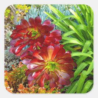 Succulent rojo y verde del Amy Vangsgard Pegatina Cuadrada