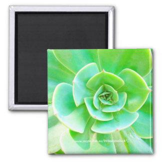 Succulent Rosette - Magnet