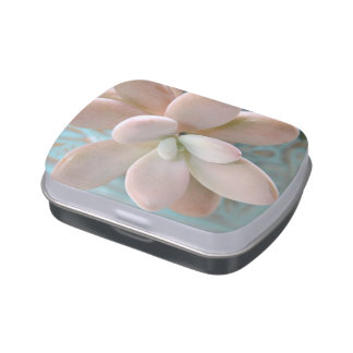 Succulent Sedum Pink Jelly Bean Plant Jelly Belly Candy Tins
