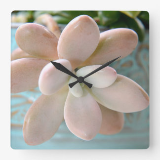 Succulent Sedum Pink Jelly Bean Plant Square Wall Clock
