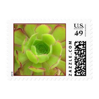 Succulent Stamp