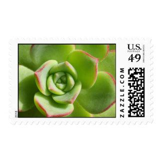 """Succulent verde de la """"gallina y de los polluelos"""" timbres postales"""