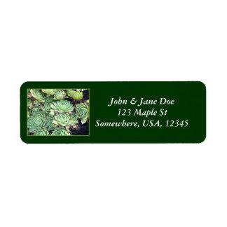 Succulent verde etiquetas de remite