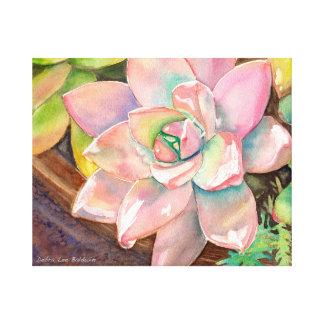 Succulent Watercolor by Debra Lee Baldwin Canvas Print
