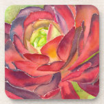 Succulent watercolor coaster by DLB