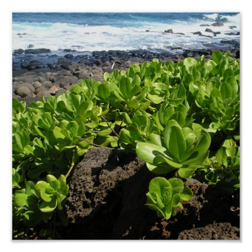 Succulents 1 de Kauai Poster