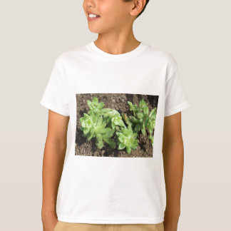 Succulents at The Sky Garden, London T-Shirt