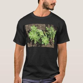 Succulents at The Sky Garden, London T-Shirt