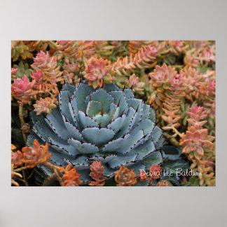 Succulents azules y anaranjados póster