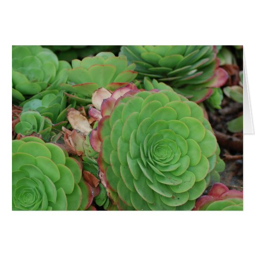 Succulents (Blank) Greeting Cards
