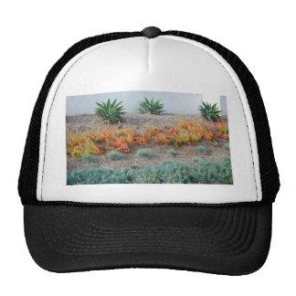 Succulents coloridos gorros bordados