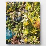 Succulents con el vidrio azul placas de madera
