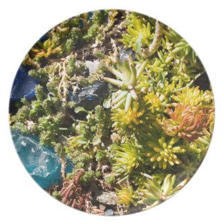 Succulents con el vidrio azul platos de comidas