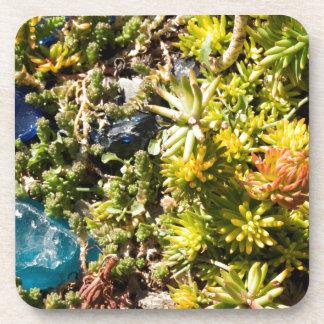 Succulents con el vidrio azul posavasos de bebidas