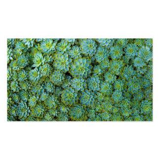 Succulents - Echeveria plant Business Card