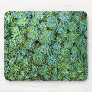 Succulents - Echeveria plant Mousepads