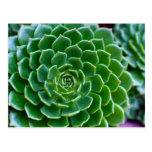 Succulents Echeveria plant Postcard