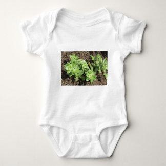 Succulents en el jardín del cielo, Londres Body Para Bebé