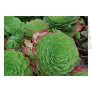 Succulents (espacio en blanco) tarjeta pequeña