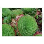 Succulents (espacio en blanco) tarjetón
