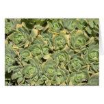 Succulents florales felicitaciones