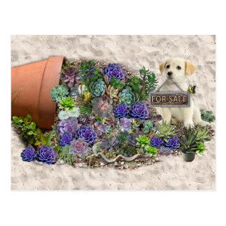 Succulents for sale postcard
