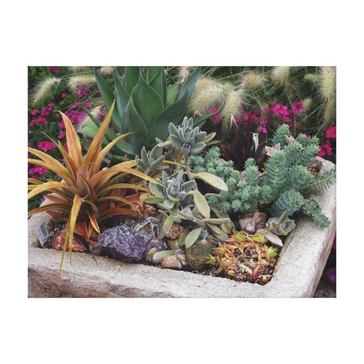 Succulents Garden Stretched Canvas Print