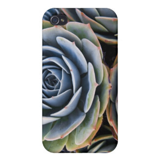 Succulents i covers for iPhone 4
