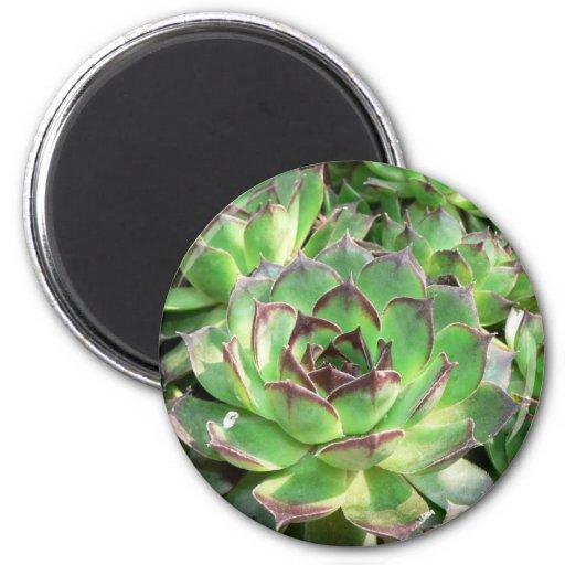 Succulents Imán Redondo 5 Cm