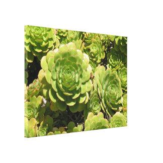 Succulents Impresiones En Lona