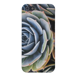 Succulents iPhone Case Case For iPhone 5