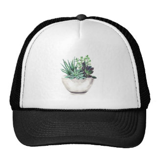 Succulents.jpg Gorro