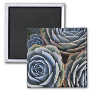 Succulents Magnet