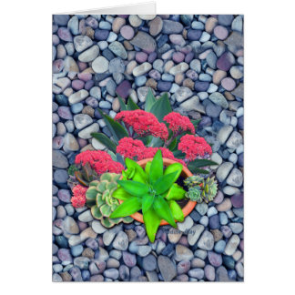succulents on a riverbed card