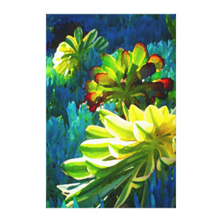 Succulents on Blue by Amy Vangsgard Gallery Wrapped Canvas
