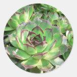 Succulents Pegatina