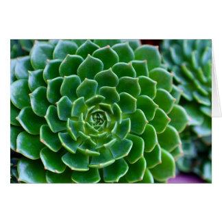 Succulents - planta de Echeveria Tarjeta De Felicitación