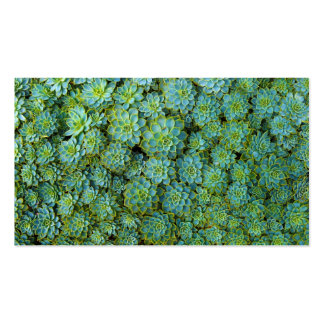 Succulents - planta de Echeveria Tarjetas De Visita