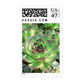 Succulents Postage