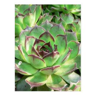 Succulents Postcard