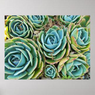 Succulents Poster