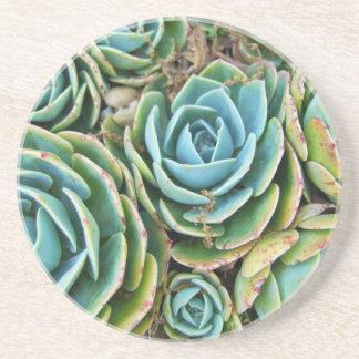 Succulents Sandstone Coaster