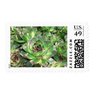 Succulents Sellos Postales