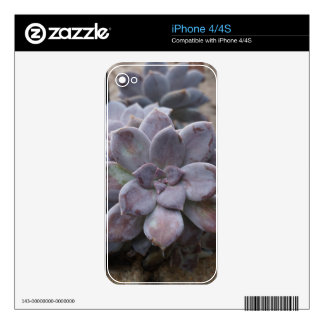 Succulents Skin For iPhone 4S