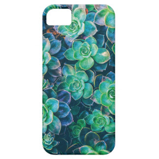 Succulents, Succulent, Cactus, Cacti, Green, Plant iPhone SE/5/5s Case