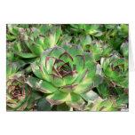 Succulents Tarjeta